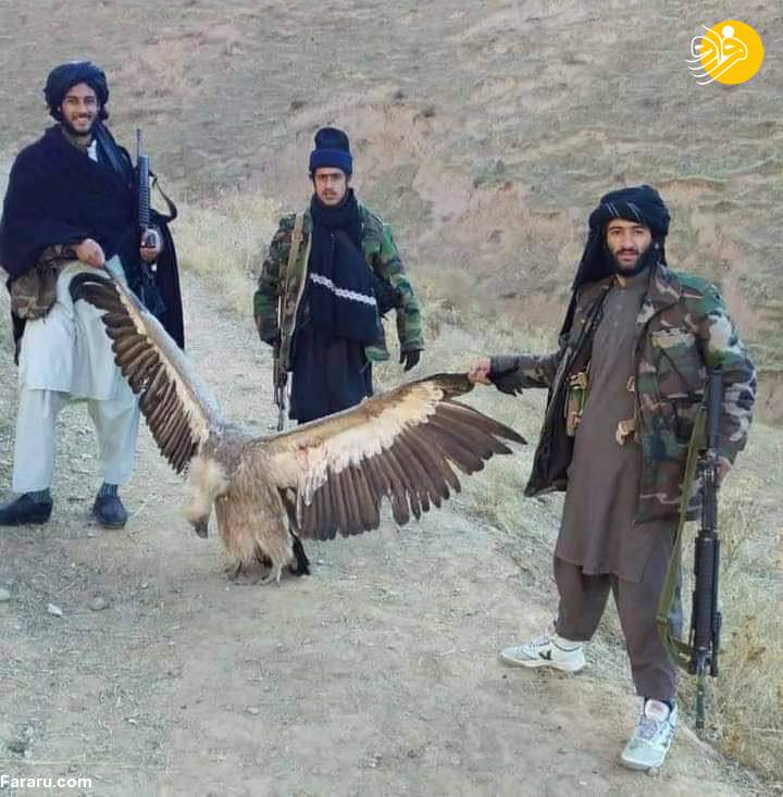 شکار پرنده