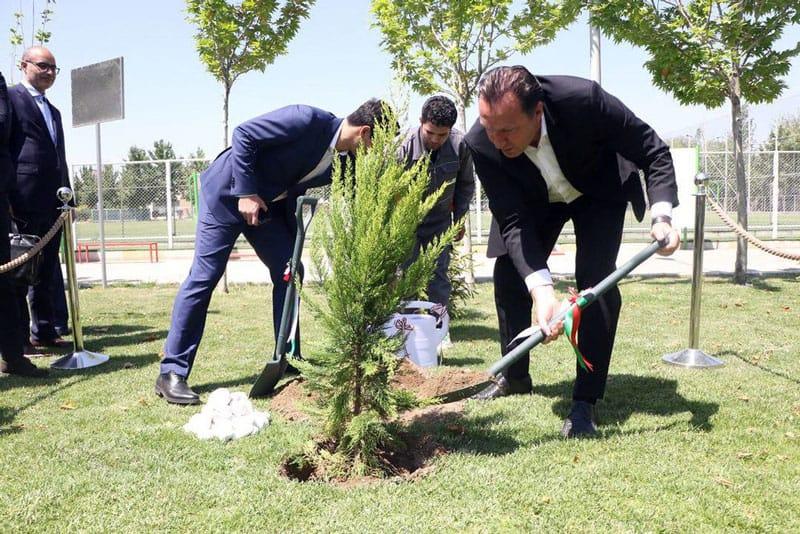 درختکاری مارک ویلموتس