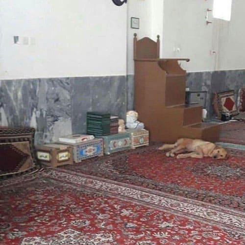 سگ در مسجد